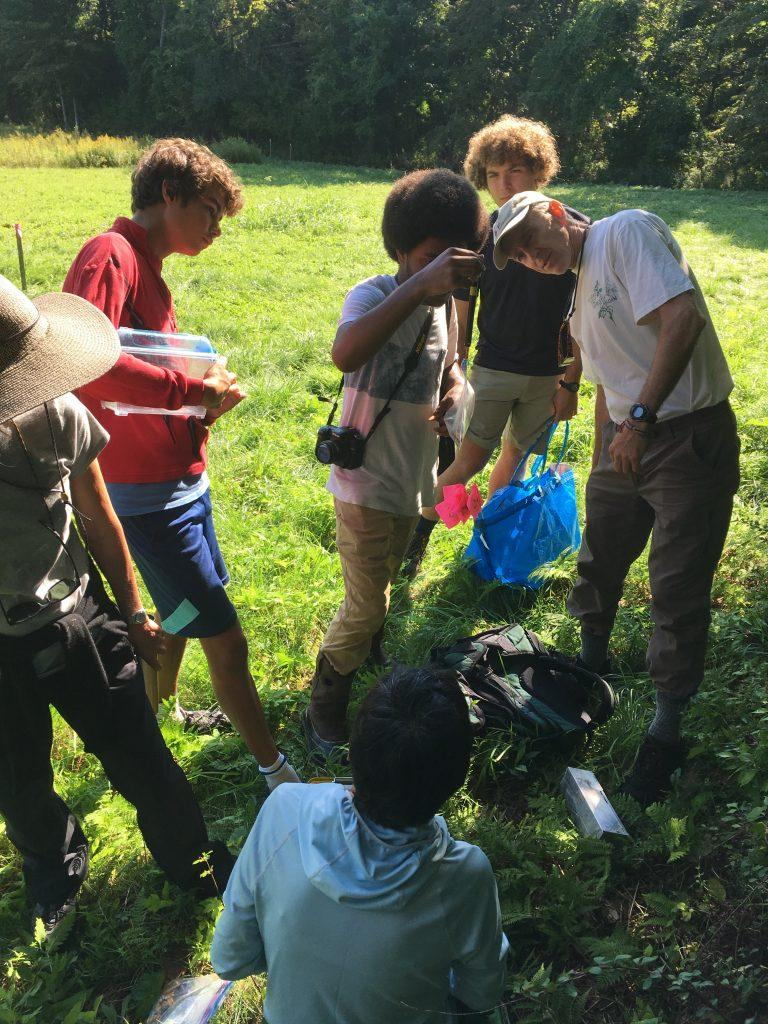 At the 2018 Berkshire Bioblitz, held in Hopkins Forest, students, scientists and community members came together to document wildlife in the area.   Photo courtesy of Sarah Gardner.