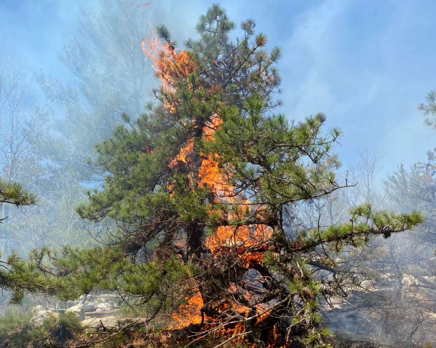 Since Friday, a wildfire has burned through over 900 acres of forest in Williamstown and Clarksburg. (Photo courtesy of Will Titus.)